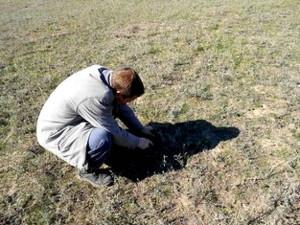 Изучение ботанического состава травостоя