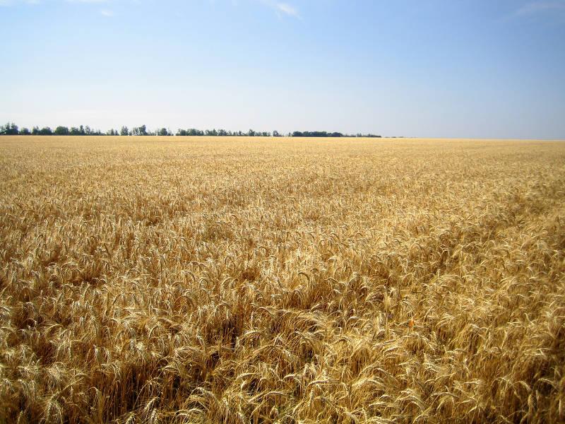 В крае 85% минеральных туков используется под зерновые культуры