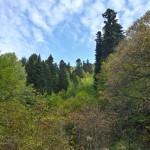 Великолепный лес, и в нём много ярко-красной рябины