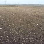 Последствия пыльной бури