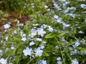 Цветущий Домбай