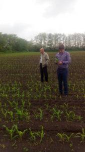 Начальник отдела геоинформационных технологий Олейников А.Ю. проводит визуальный осмотр посевов кукурузы