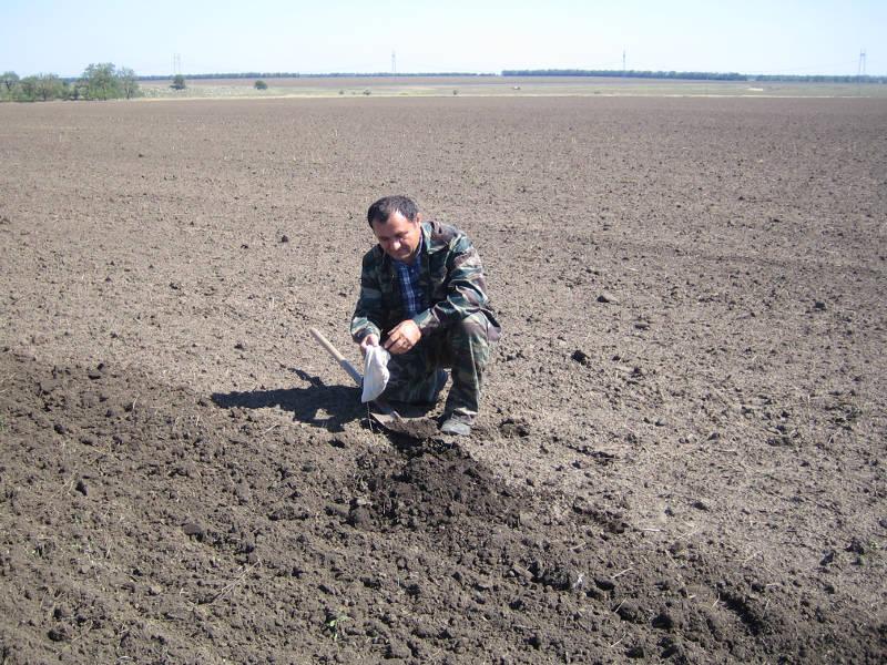 Главный агрохимик отдела ПУиО Давыдов В.Е. отбирает образцы для проведения предпосевной почвенной диагностики в СПК «Колхоз Родина» Труновского района