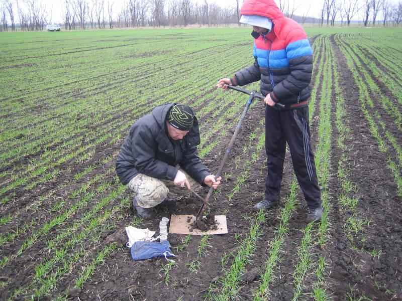 Агрохимик II категории отдела ПУиО Фильчев М.И. совместно с сотрудником СПК колхоз «Родина» Труновского района проводят отбор почвенных образцов на посевах озимой пшеницы