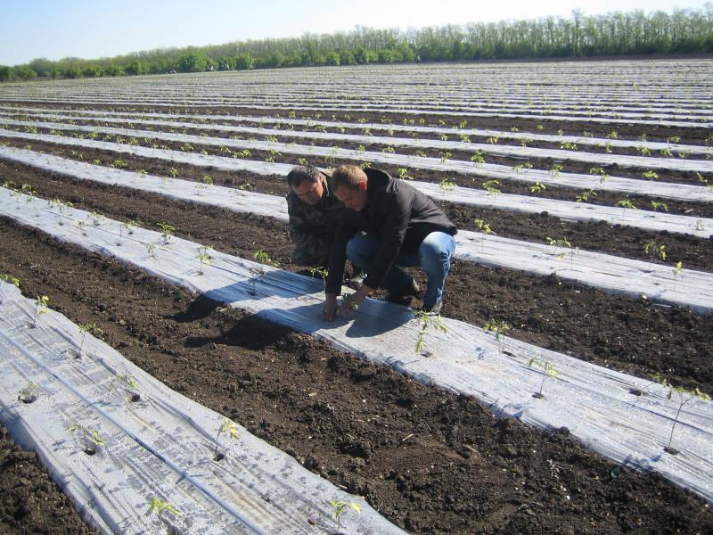 Главный агрохимик Давыдов В.Е. и агроном КФХ «Портнов» осматривают опытное поле
