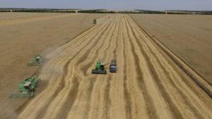 Комбайн собранное зерно пересыпает в грузовик