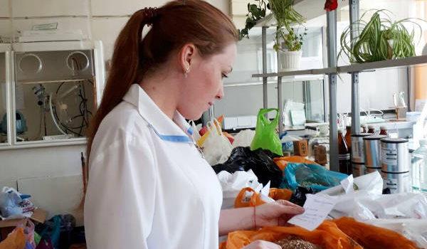 Отбор проб зерна пшеницы для определения фузариоза. Агрохимик I категории ‑ Бондаренко Н.В.