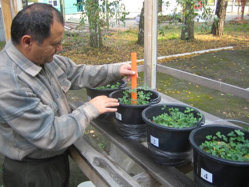 Определение высоты растений люцерны