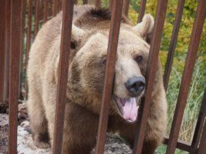 Медведица, зовут Маня