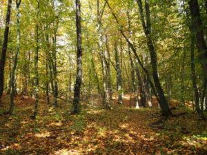 Осенний лес Адыгеи