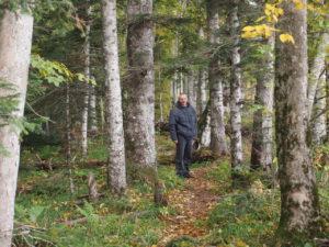 Главный программист в лесу
