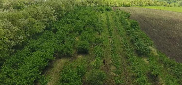 Специалист агрохимцентра на садовом участке. Васильевский, Кочубеевский район