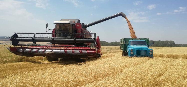 Уборка урожая на Ставрополье