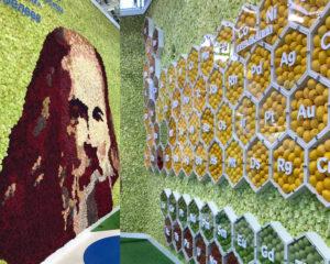Портрет Менделеева и химическая таблица выполнены в оригинальном дизайнерском решении, собранные из цветов, овощей и фруктов