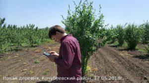 Фото 2. Выполнение работ по инвентаризации садов с применением планшета
