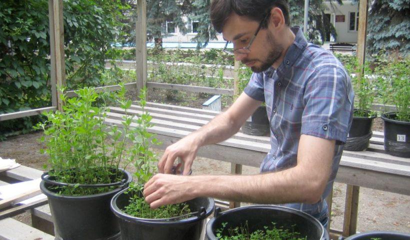 Вегетационные опыты