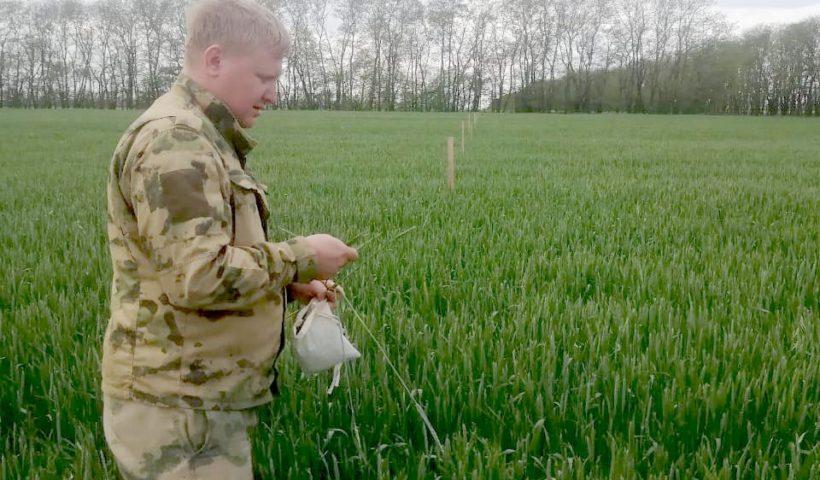 Агрохимик 1-ой категории сектора применения удобрений и опытов Михаил Фильчев проводит листовую диагностику на опытных делянках