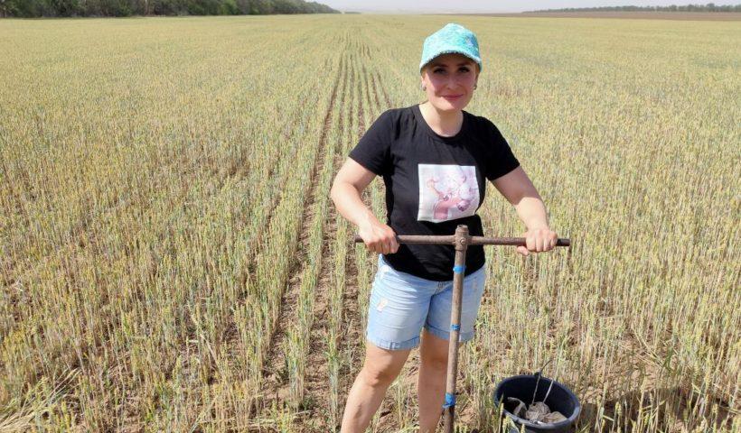 Отбор образцов на определение влаги в почве проводит ведущий агрохимик Наталья Махалина