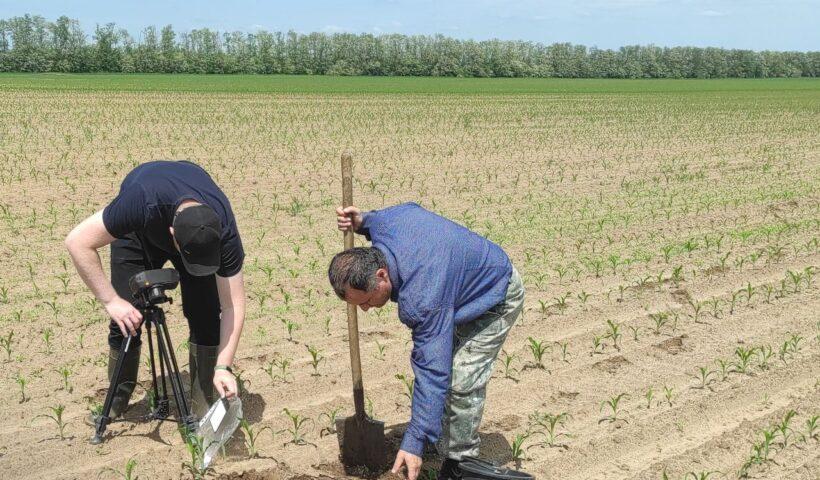 Специалисты ООО «ТЕХИНТЕГРАТОР» и агрохимцентра проводят съемку посевов кукурузы на полях СПК «Дубовский» Шпаковского района
