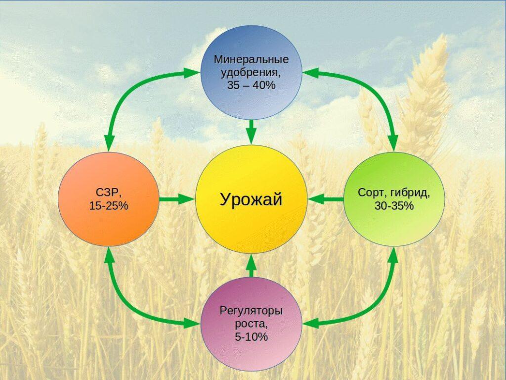Научная система питания – основа успеха при применении интенсивных технологий выращивания сельскохозяйственных растений