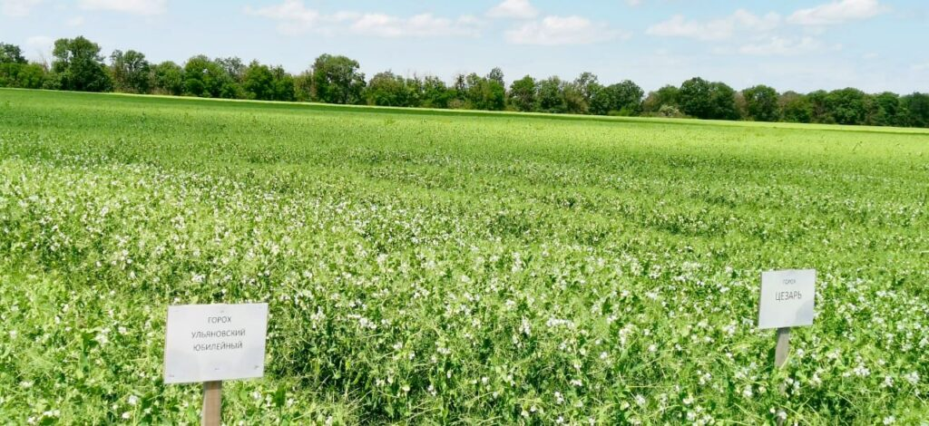 Новые сорта сельскохозяйственных культур
