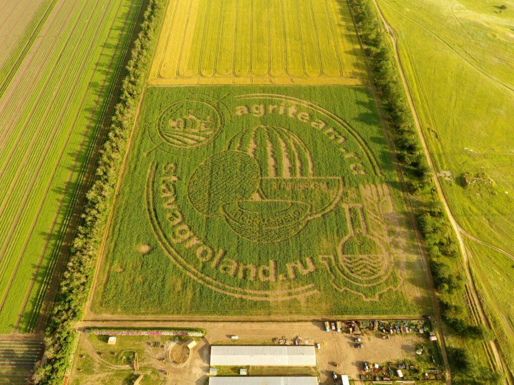 """Кукурузный рисунок в КФХ """"Пономарёво"""". Дата аэросъёмки 23 июня 2021г."""
