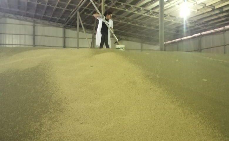 Отбор проб зерна гороха