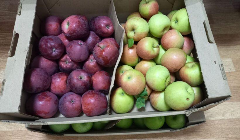 Пробы яблок, сданные для проведения в них анализов