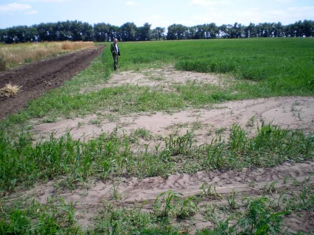 for Fertile soil 07
