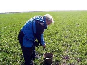 Полевые работы по отбору образцов почв проводит гл. почвовед Макоед А.А.