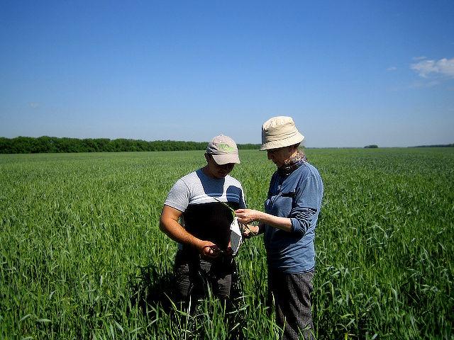 Агрохимический мониторинг состояния посевов