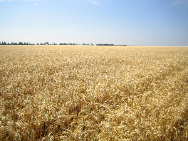 Агрохимическое обеспечение урожая  в 2013 году в крае