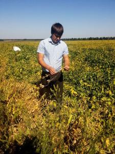 Отбор растительных проб проводит главный агрохимик Олейников А.Ю.
