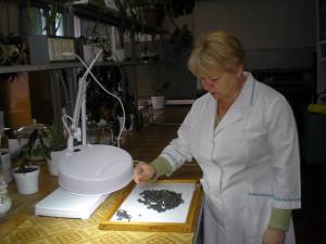 Разбор на сорную и масличную примесь. Специалист I категории ‑ Анциферова Е.А.
