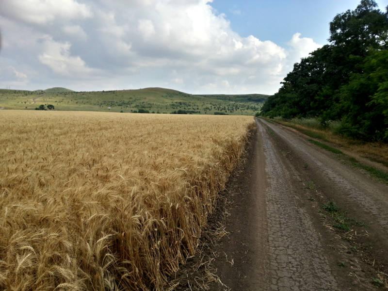 Трудовой вклад в урожай 2014 года