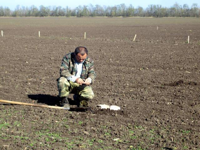 Главный агрохимик отдела применения удобрений и опытов Давыдов В.Е. проводит отбор почвенных образцов на опытном поле