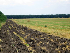 the-use-of-mineral-fertilizers-for-the-harvest-2015-01