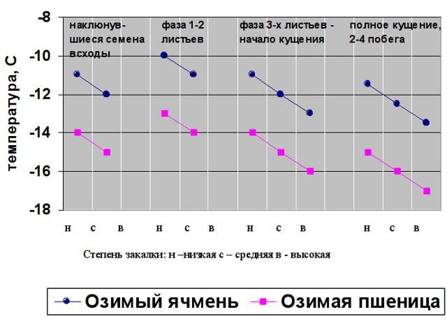 Рис. 1. Критическая для растений температура в зоне узла кущения озимых культур в зависимости от фазы развития и степени закалки