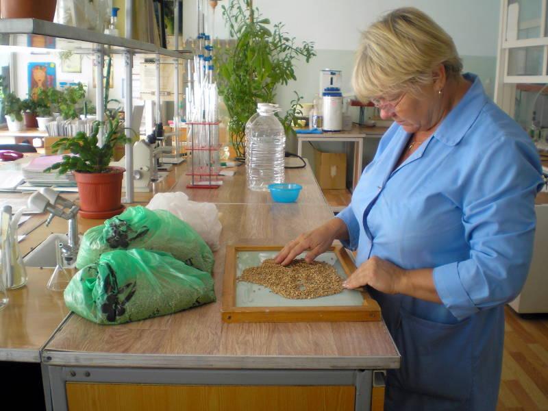 Определение сорной и зерновой примеси в пшенице. Агрохимик I категории ‑ Анциферова Е.А.