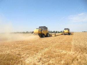 Уборка зерновых, Красногвардейский район. Комбайны New Holland CS660