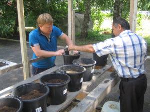 Главный агрохимик Давыдов В.Е. и агрохимик II категории Фильчев М.И. подготавливают вегетационные сосуды