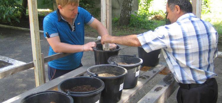 Закладка опыта по применению бентонита под многолетние травы в Ставропольском крае