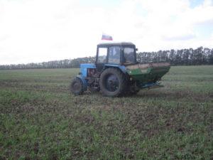 Трактор вносит нитроаммофоску