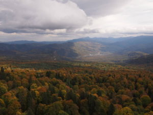 Лес, горы и суровое небо