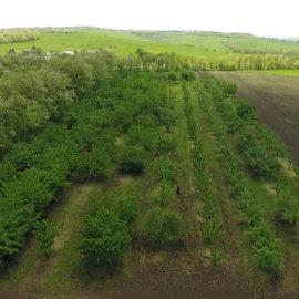 Инвентаризация садов в Ставропольском крае