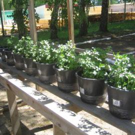 Вегетационный опыт с использованием бентонита
