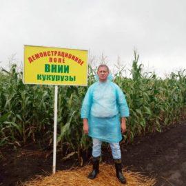 Отечественные гибриды кукурузы на зерно и силос