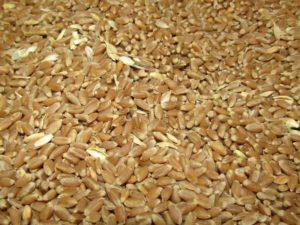 Зерно урожая 2018г