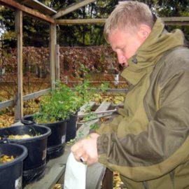 Вегетационный опыт по использованию бентонита под многолетние травы