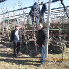 Приёмы обрезки плодового сада